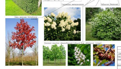 Основной ассортимент растений