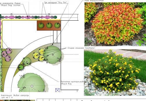 Ассортимент растений в миксбордере у крыльца