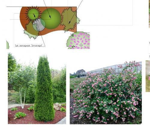 Ассортимент растений в миксбордерах
