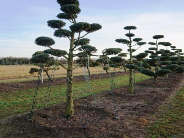 Растения из Европы. Питомник Lappen