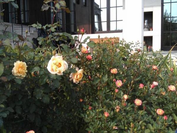 """Сад в стиле модерн. Частное владение 1,2 Га, КП """"Жуковка-21 век"""""""